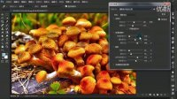 PS cc2015版全解视频教程 31 可选颜色与HDR色调