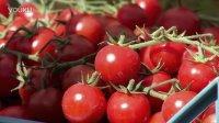 《意大利啊》——西红柿盛宴
