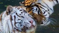 动物不可能的朋友2