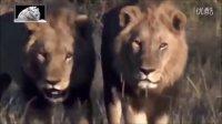 国家地理-狮王的生活