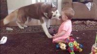 """超温馨!!美国宠物狗和萌娃甜蜜""""亲吻"""""""
