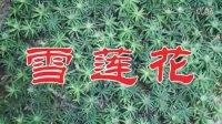 水灵灵视频广场 - 雪莲花