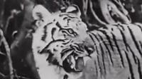 丛林狮虎斗电影完整版