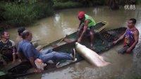 亚马逊惊现200公斤大鱼,然并卵依旧被吃