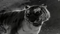 地坑狮虎斗完整版