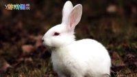 游戏猫MAO 儿歌 小白兔白又白 小兔子乖乖 两只老虎 数鸭子 小毛驴 拔萝卜小燕子 童话故事