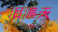 伤感情歌【泪满天】网络流行歌曲
