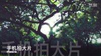 【手机拍大片】一棵树能拍成什么样 iPhone 5s