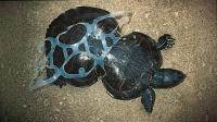 猜猜这是什么龟,因此发明了可以吃的啤酒环