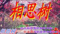 网络情歌【相思树】伤感流行歌曲mtv