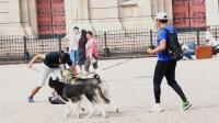 【JokeTV社会实验第10期】中国街头虐狗,路人会制止吗?#社会实验#