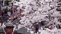【6TV学日语看日本】春天~和YUMA去看樱花