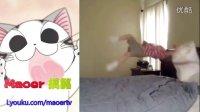 搞笑合集【一】猫儿整理