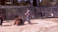 实拍男子豁出命与棕熊拍照 熊突然将其扑倒撕咬