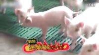 """【笑掉大牙 搞笑集锦】""""猪坚强""""最后的舞步"""