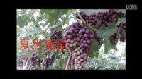2015年夏黑葡萄生长全程