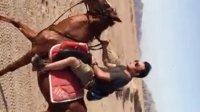 马童说是西班牙马 什么种我没听懂 但是真的好骑 上马就觉得帅气 跑起来都觉得高贵