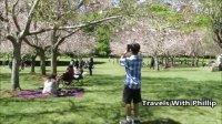 奥克兰的春天印象