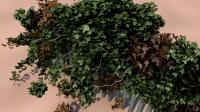 C4D 常春藤生长插件的使用教程