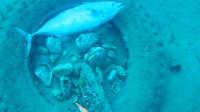 潜水员好奇拿走死鱼 随后被接下来的一幕吓到