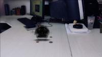 《漫步小特效12》AE黑暗能量球 AE基础教程AE五毛特技之黑暗能量球