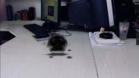 《五毛小短片01》暗黑能量球