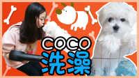 小伶的家首次公开&COCO洗澡~!