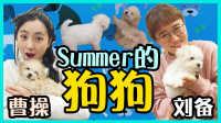 介绍summer的狗狗曹操和刘备!|小伶玩具