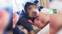 宠物piapiapia : 狗狗也会养孩子 亲爹都哭了