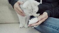 喵呜记 第11集:如何拯救漫天纷飞的猫毛