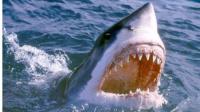 【逍遥小枫】终极BOSS大白鲨来啦!终于不是死亡结局了 | 海底大猎杀(Fish Sim)#26