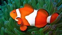 【逍遥小枫】小丑鱼的巨人国玩法,巨无霸三叶虫! | 海底大猎杀(Fish Sim)#29
