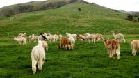 新西兰旅游《绿色之国》--男博万视觉