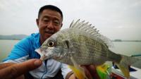 《游钓中国》第二季第46集 初入广东玩法新奇 手竿也能钓海鱼