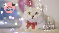 猫咪专属罐头蛋糕!喵主子的生日大餐竟然这么奢华!【举起爪儿来】