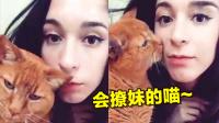 【萌星人de那些破事】单身狗,快跟小猫学学如何把妹!