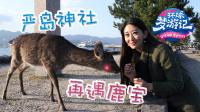 严岛神社再遇鹿宝 16