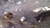 猴子不但砸了狗狗的饭碗 泼猴还不断调戏哮天犬!