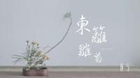 一期一花·东篱雏菊