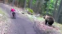 车手森林速降遭狗熊追 赛车过弯漂移险坠山谷