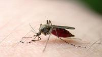 蚊子最怕这些食物,夏天多吃,再不用点蚊香