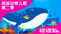 Blue Whale | 英语动物儿歌 第二季 16 |  碰碰狐!动物儿歌