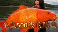 【落尘】海底大猎杀 500级鲸鱼是怎么吃成的,横跨海洋秒杀大白鲨神级金鱼【上】