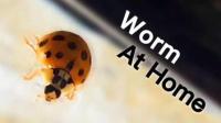 有一只瓢虫-Ladybug