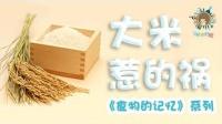 食物的记忆之大米惹的祸 14