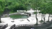 小象失足落水, 老爹老妈立刻齐心协力拯救, 最后成功把宝宝弄上岸, 营救过程也是萌萌哒
