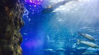 谁知道这条西班牙海洋馆的鱼叫啥名字? 感觉软的有点过分了