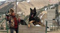 一部讲述大西北护森员与狗的情感故事电影《血狼犬》