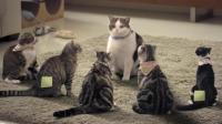一群猫组团反抗, 竟然是因为洗澡...