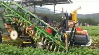 日本机械化拔萝卜, 2小时就能拔掉5000棵